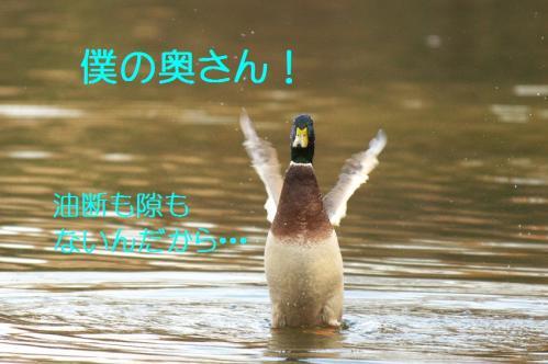 030_20101219200046.jpg