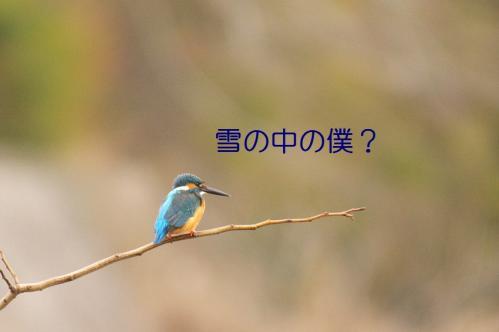 030_20101231153740.jpg