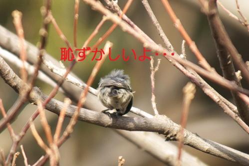 030_20110118214104.jpg