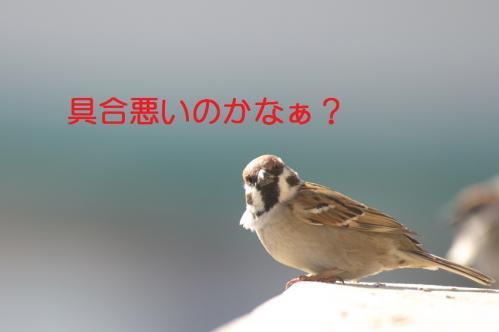030_20110120222203.jpg