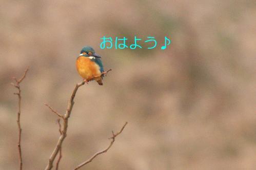 030_20110123203843.jpg