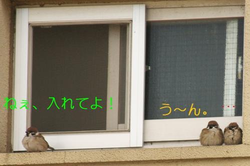 030_20110131211629.jpg