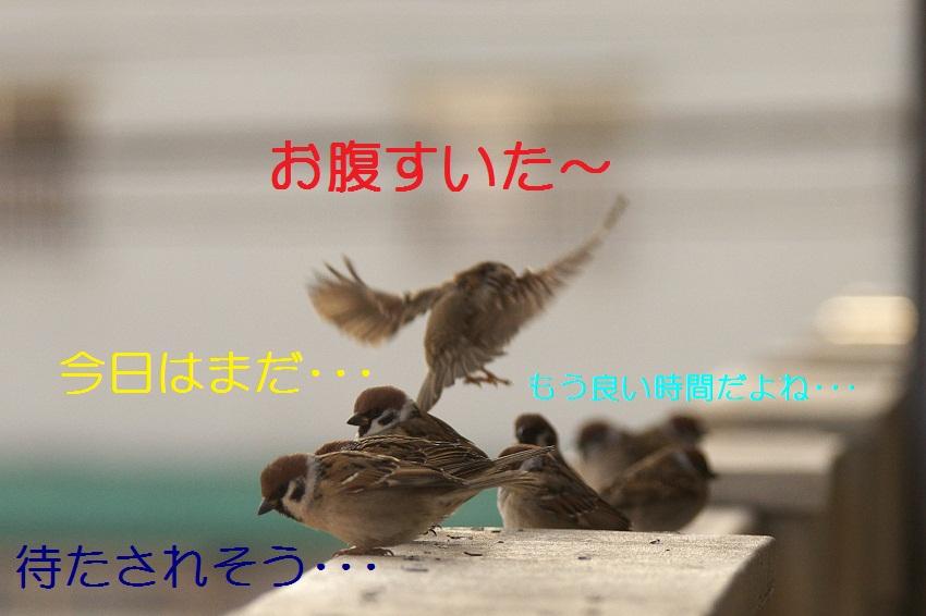 関西ローカル65577(´・ω・`)しのぶの貧乳を揉みたい©2ch.net YouTube動画>2本 ->画像>60枚
