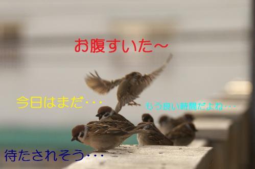 030_20110205220700.jpg