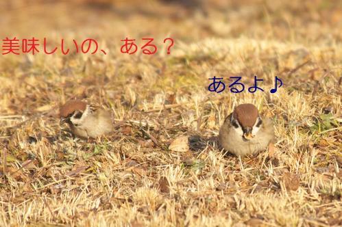 030_20110209221443.jpg