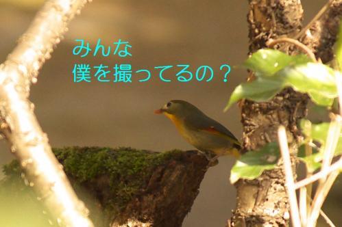 030_20110314213943.jpg