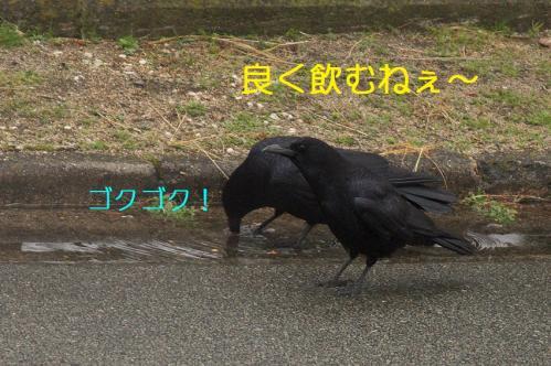 030_20110325004020.jpg