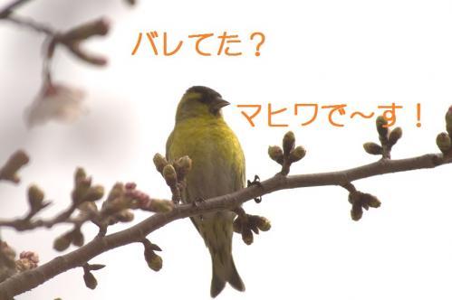 030_20110406222912.jpg