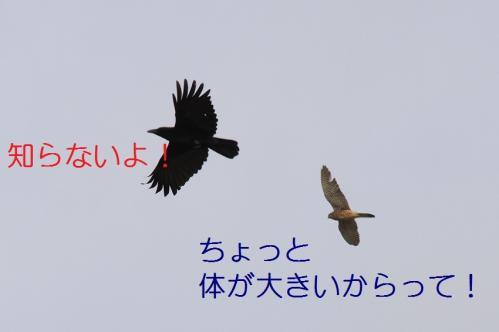 030_20110415043112.jpg