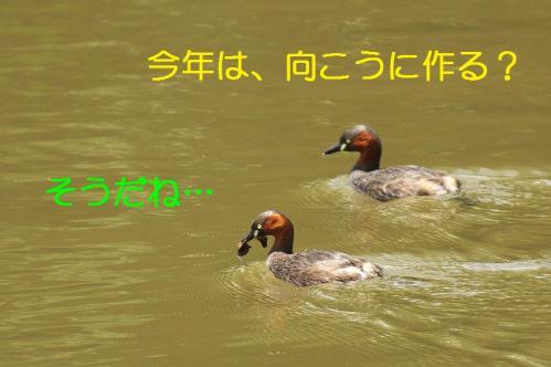 030_20110531202130.jpg