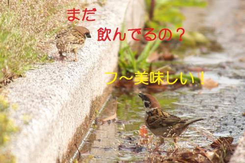 030_20110608221258.jpg