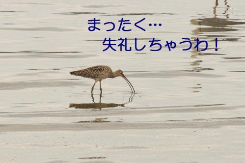 030_20110621204930.jpg