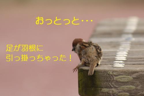 030_20110630202345.jpg