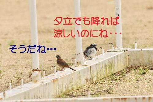 030_20110730220636.jpg