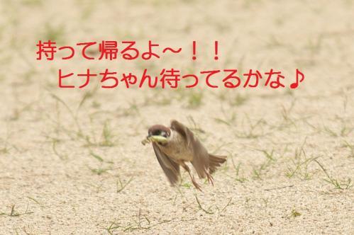 030_20110731194702.jpg
