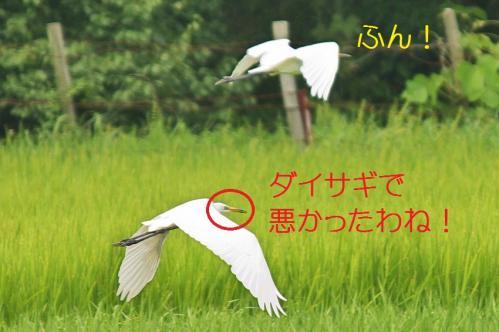 030_20110806212057.jpg