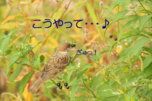 030_20110808211644.jpg