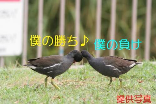 030_20110828211228.jpg