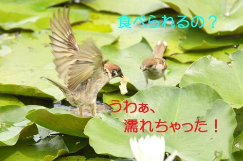 030_20110829224801.jpg