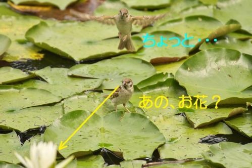 030_20110831213051.jpg