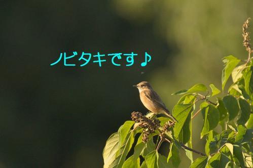 030_20111004221500.jpg