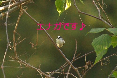 030_20111005213436.jpg