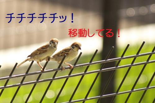 030_20111006190549.jpg