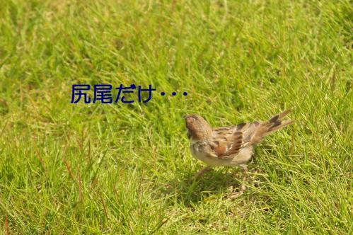 030_20111012232431.jpg