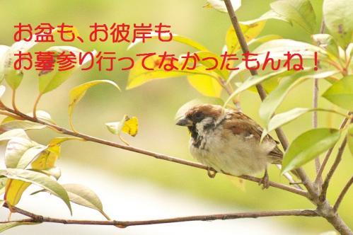 030_20111016185035.jpg