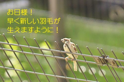 030_20111019222126.jpg