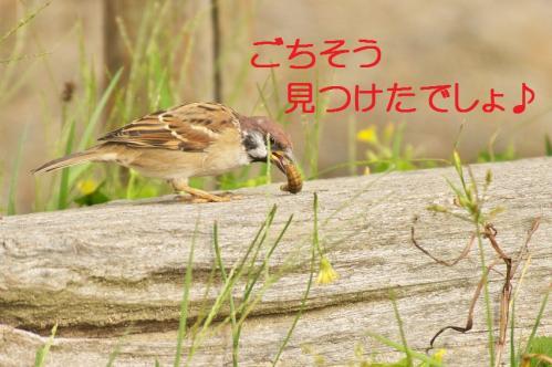 030_20111020220416.jpg
