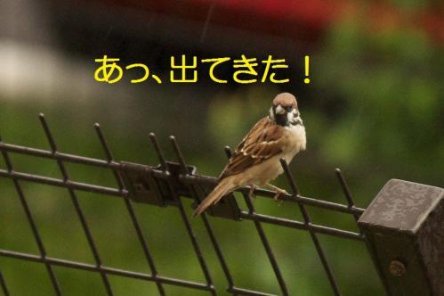 030_20111022182939.jpg