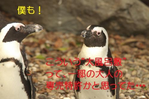 030_20111024220116.jpg