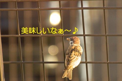 030_20111027194527.jpg