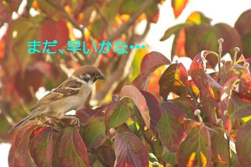 030_20111031213608.jpg