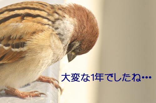 030_20111230192617.jpg