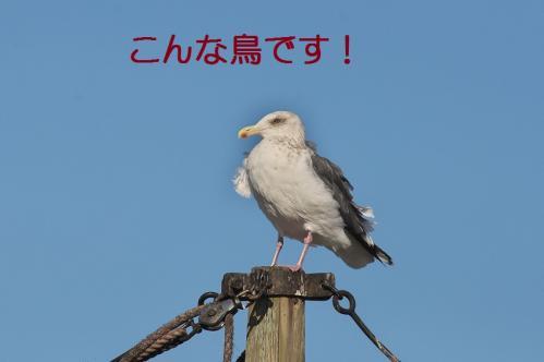 030_20120108212014.jpg
