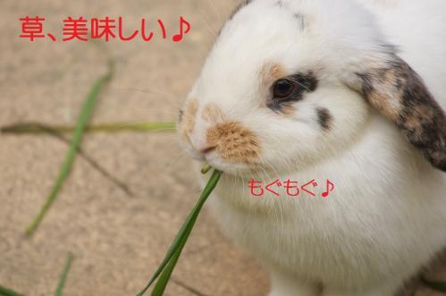 030_20120130221455.jpg