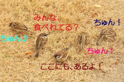 030_20120131202518.jpg