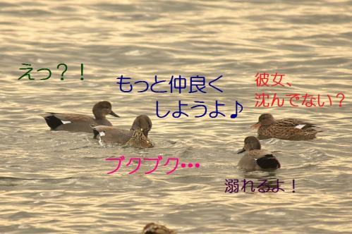 030_20120205205914.jpg