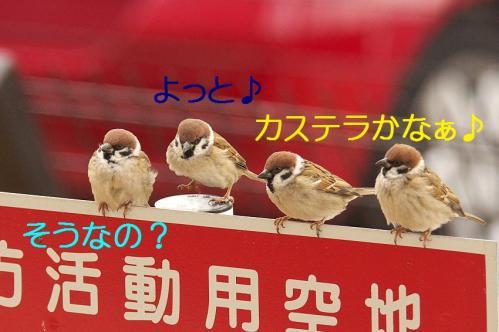 030_20120212185508.jpg
