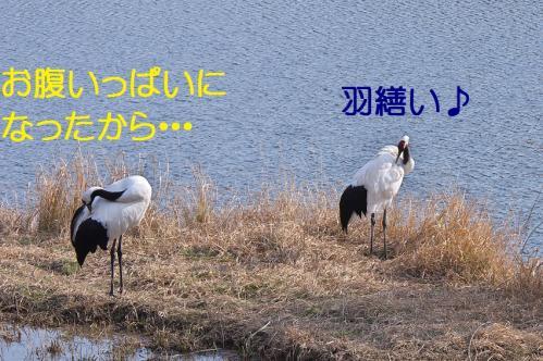 030_20120215214551.jpg