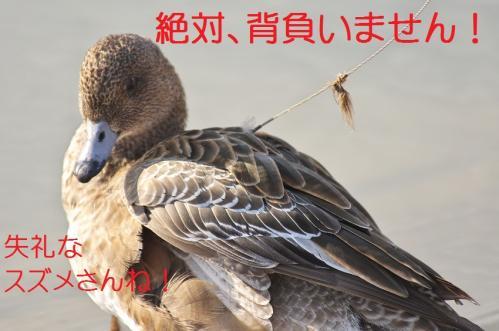 030_20120414204439.jpg