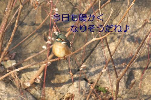 035_20110227202750.jpg