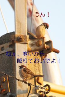 035_20110315205650.jpg