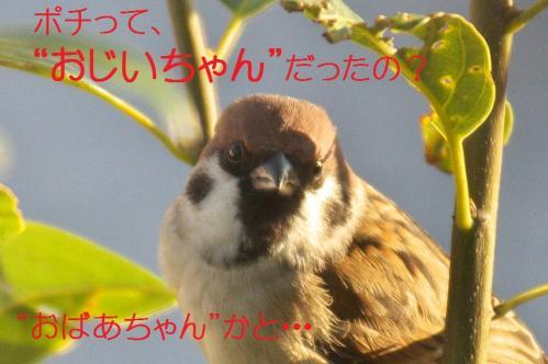 035_20111203215532.jpg