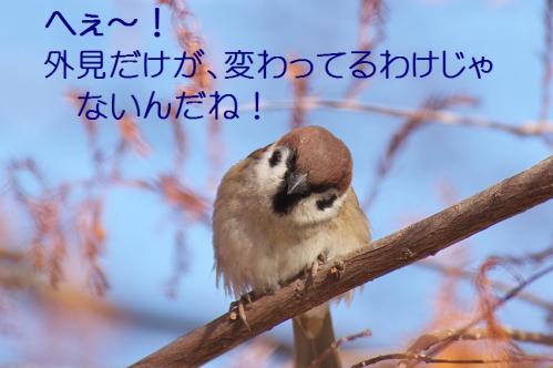 035_20120125231734.jpg