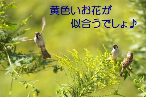 03_20101013231635.jpg