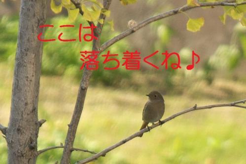 03_20101103223315.jpg