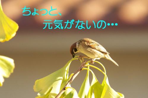 040_20101130191350.jpg